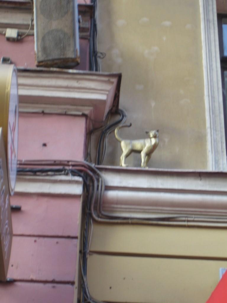 Кошки Санкт Петербурга