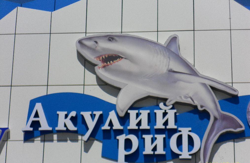 Фото Ейск дельфинарий