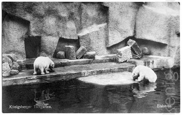Калининград. Зоопарк