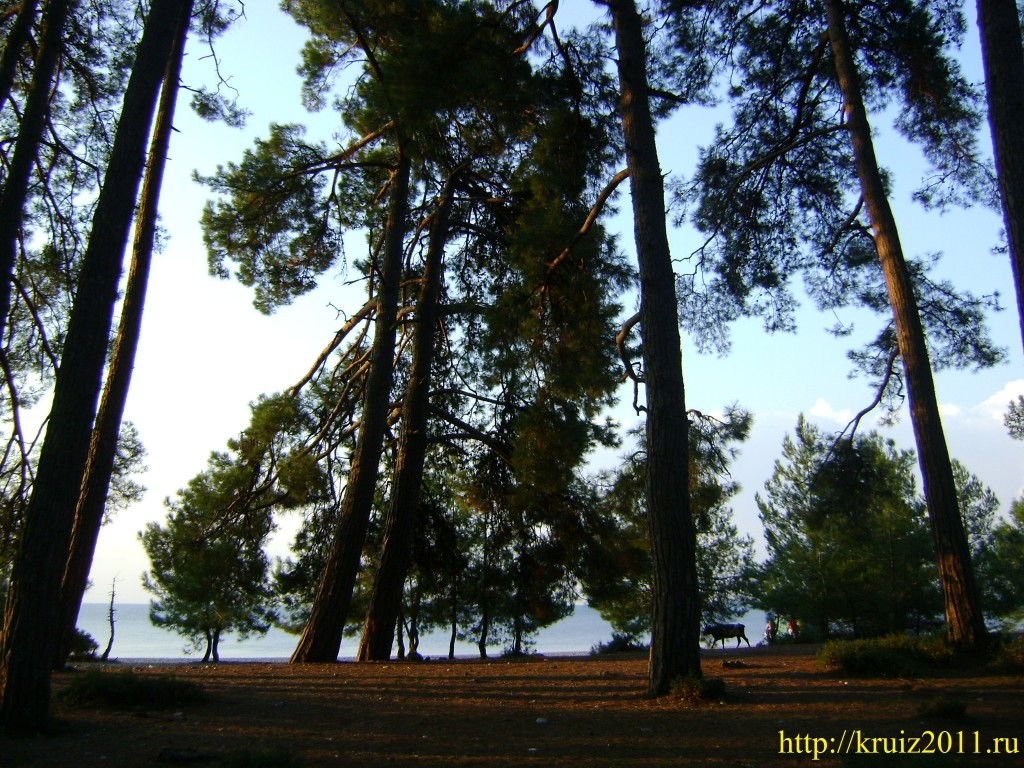 Отдых в Абхазии. Лидзава