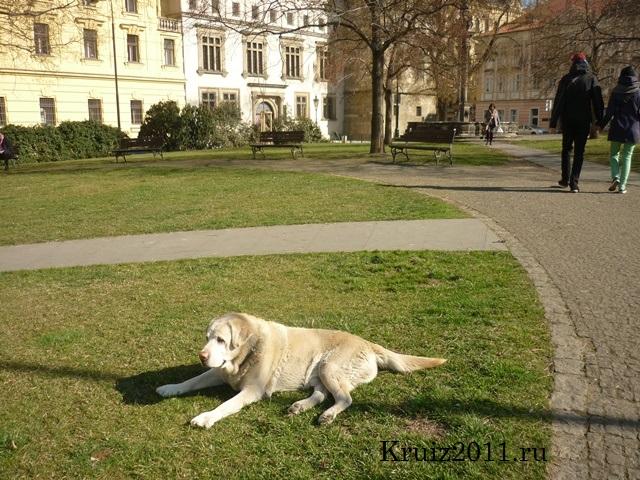 Чехия. Прага. В городе.